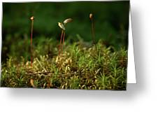 Haircap Moss Greeting Card by Jouko Lehto
