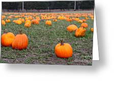Halloween Pumpkin Patch 7d8383 Greeting Card by Wingsdomain Art and Photography