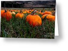 Halloween Pumpkin Patch 7d8405 Greeting Card by Wingsdomain Art and Photography