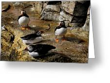 Hanging Out Greeting Card by Lee Dos Santos