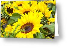 Happy Sunflowers Greeting Card by Dina Calvarese