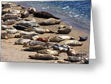 Harbor Seals Sunbathing On The Beach . 40d7553 Greeting Card by Wingsdomain Art and Photography