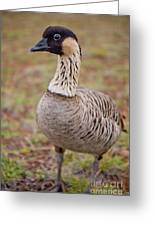 Hawaiian Goose - Nene - Closeup - Full Body Greeting Card by Denis Dore