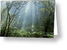 Hawaiian Rainforest Greeting Card by Gregory Dimijian MD