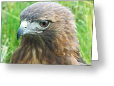 Hawk-eye Greeting Card by Todd Sherlock