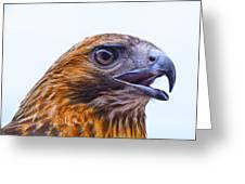 Hawk Head Greeting Card by Peg Runyan