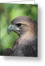 Hawk Profile Greeting Card by Alexander Spahn
