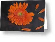 he loves me... Greeting Card by Joana Kruse