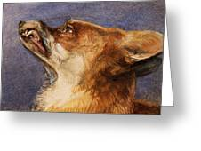 Head Of A Fox Greeting Card by John Frederick Lewis