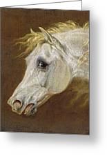 Head Of A Grey Arabian Horse  Greeting Card by Martin Theodore Ward