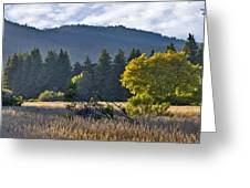 Henry Cowell Meadow Sunset Greeting Card by Larry Darnell