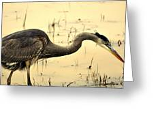 Heron Fishing Greeting Card by Marty Koch