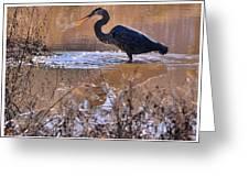 Heron Head Shake - C3136u Greeting Card by Paul Lyndon Phillips