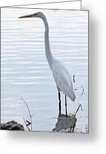 Heron Reflection Greeting Card by Becky Lodes