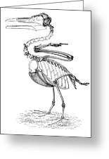 Hesperornis Greeting Card by Science Source