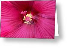 Hibiscus Close Up Greeting Card by Marsha Heiken