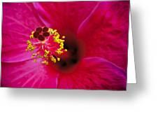 Hibiscus Macro Greeting Card by Joe Carini - Printscapes