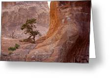 Hidden Curves Of Arches Greeting Card by Ramie Liddle