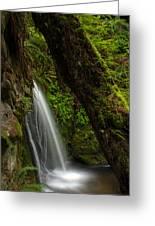 Hidden Falls Greeting Card by Mike Reid
