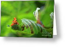 Hiding Comma Butterfly Greeting Card by Clare Scott