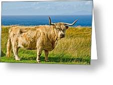 Highland Cow Greeting Card by Chris Thaxter
