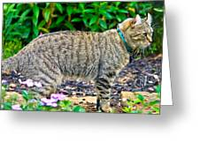 Highland Lynx Cat In Garden Greeting Card by Susan Leggett