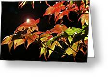 Highlighting The Season Of Fall 2 Greeting Card by Cindy Wright