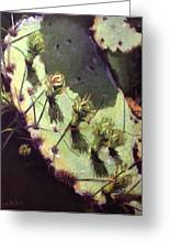 Hill Country Cactus Greeting Card by Jacquie McMullen