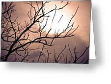 Hindered Sunset Greeting Card by Victoria Lawrence