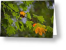 Hint Of Autumn Greeting Card by Bonnie Bruno