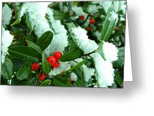 Holly In Snow Greeting Card by Sandi OReilly