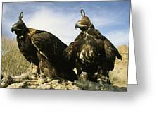 Hooded Eagles Stand Ready For Hunting Greeting Card by Ed George