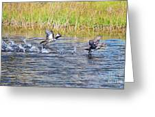 Hooded Mergansers Take Flight Greeting Card by Lynda Dawson-Youngclaus