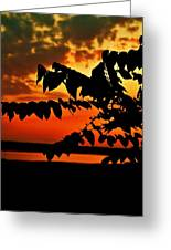Horicon Marsh At Sunset Greeting Card by Alisha Luby