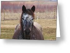 Horse-1 Greeting Card by Todd Sherlock
