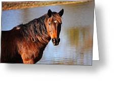 Horse By The Water Greeting Card by Jai Johnson