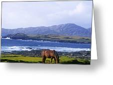 Horse Grazing In A Field, Beara Greeting Card by The Irish Image Collection
