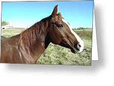 Horse In Chocolate Greeting Card by Brian  Maloney