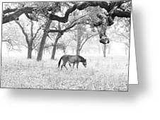 Horse In Foggy Field Of Oaks Greeting Card by CML Brown