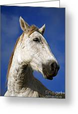 Horse Portrait Greeting Card by Gaspar Avila