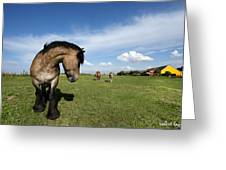 Horsepower Greeting Card by Robert Lacy