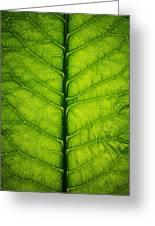 Horseradish Leaf Greeting Card by Steve Gadomski