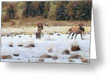 Horses running Greeting Card by Odon Czintos