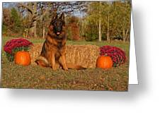 Hoss In Autumn II Greeting Card by Sandy Keeton