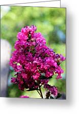 Hot Pink Greeting Card by Toni Hopper