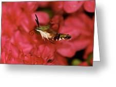 Hovering Clearwing Hummingbird Moth Greeting Card by Lara Ellis