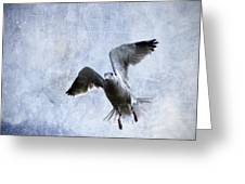 Hovering Seagull Greeting Card by Carol Leigh