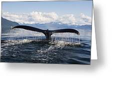 Humback Whale Diving With Tail Flukes Greeting Card by James Forte