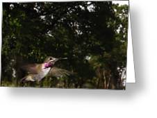 Hummer In Flight Greeting Card by Joyce Dickens