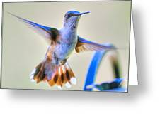 Hummingbird At The Feeder Greeting Card by Shirley Tinkham